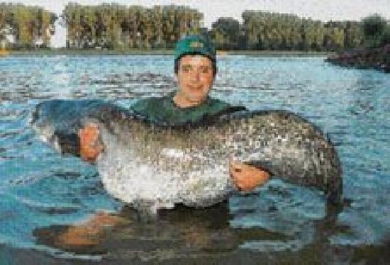 Der Rhein Bei Worms Fisch Und Fang