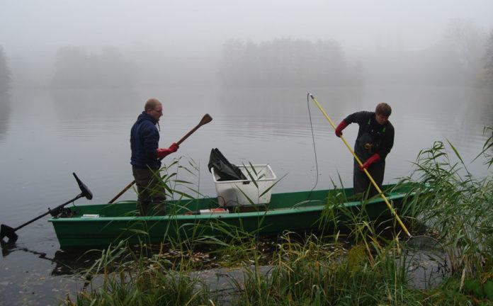Wissenschaftler befischen den Helmstedter Buschmühlenteich. Zusammenarbeit mit Forschern fördert ökologische Handlungsweisen bei Anglern. Foto: IGB, Besatzfisch