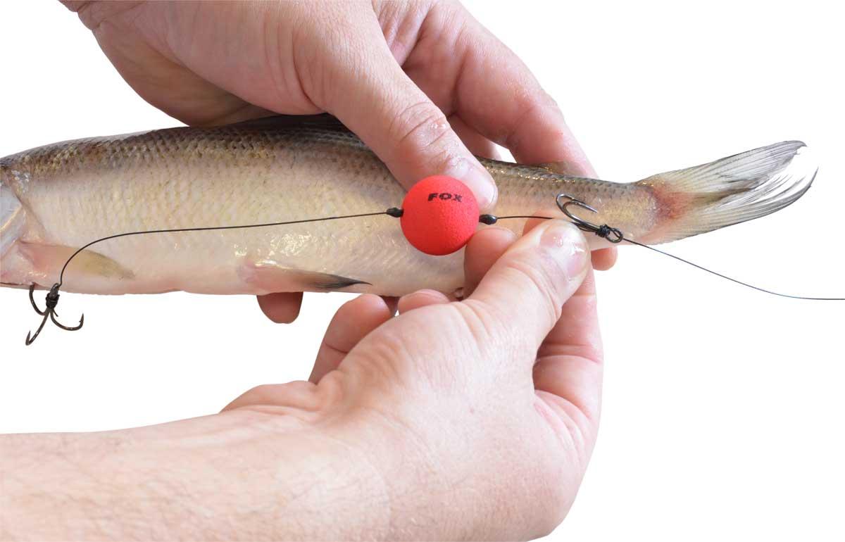 Idealerweise bohrt man eine Flunke des oberen Drillings in die stabile, knorpelige Schwanzwurzel des Köderfisches.