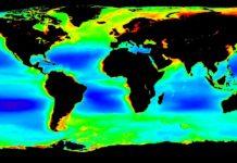 Globale Chlorophyll a-Karte, die das Team für seine Analysen verwendet hat. Blau und Grün zeigen einen niedrigen Phytoplanktongehalt an, während Rot für einen hohen Phytoplanktongehalt steht. Karte: NASA OceanColor Web