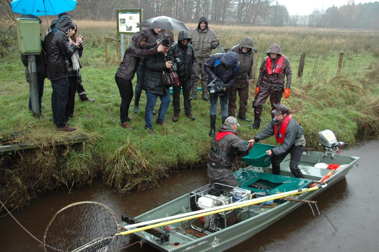Zahlreiche Gäste aus der Politik und anderen Kreisverbänden machten sich bei strömenden Regen ein Bild von der Arbeit der ehrenamtlichen Helfer beim Laichfischfang im Oberlauf der Stör.