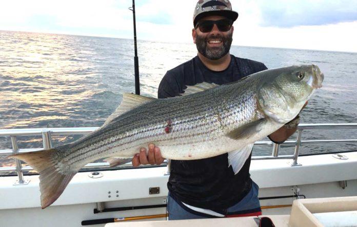 Vor Montauk wird vor allem dem begehrten Striped Bass nachgestellt. Bild: Discover Long Island