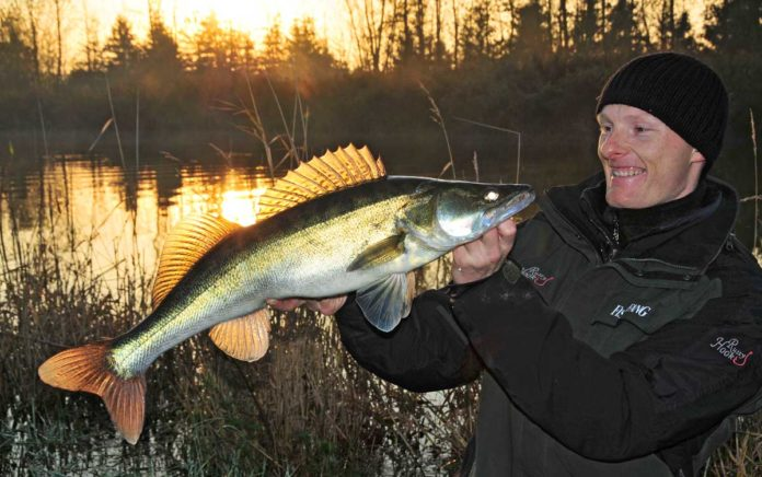 Morgenstund hat Gold im Mund - Prachtzander aus der Oste. Dämmerlicht und hoher Flusspegel haben Birgers Fang sicher mit begünstigt.