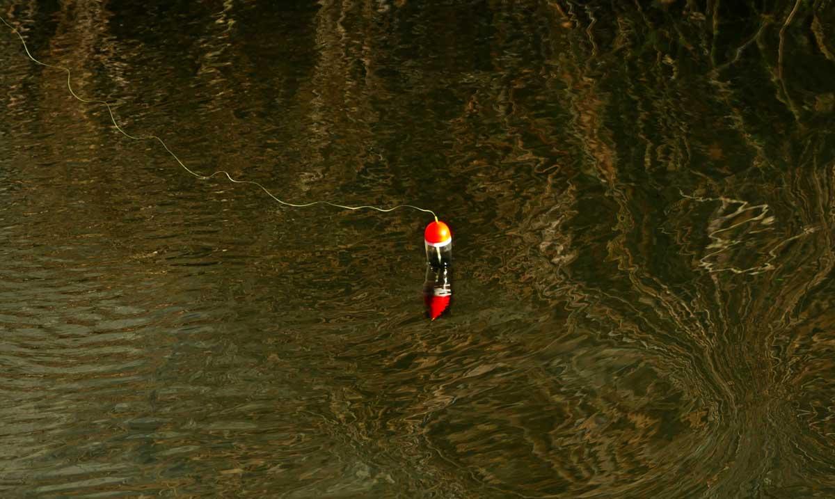 Die Pose driftet im Wasser, eine Spannung, die man keinem Nichtangler glaubhaft erklären kann.