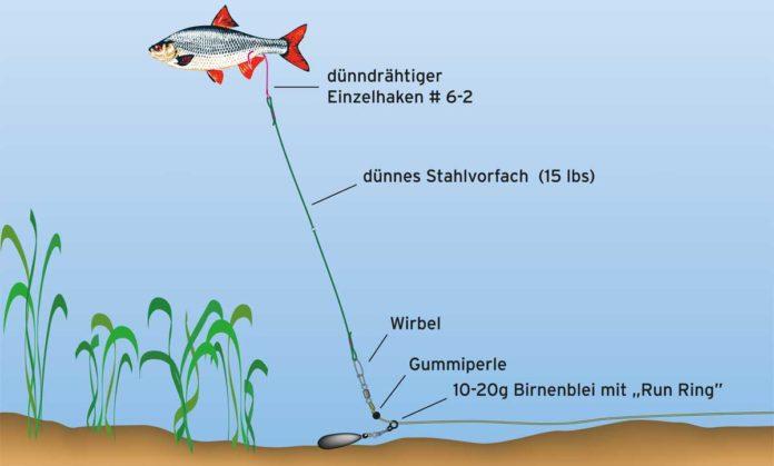 """Thomas Kalweits Montage für den Ansitz an eisfreien Gewässern: Damit der tote Köderfisch auftreibt, wird er unter Zuhilfenahme einer Arterienklemme mit ein paar Korkstückchen """"gefüttert"""". Aber nicht zu stark aufpoppen, er soll unter Wasser ganz natürlich schweben! Deshalb wird auch der Haken im Bereich der Afterflosse eingestochen. Zeichnung: Ulf Koch"""