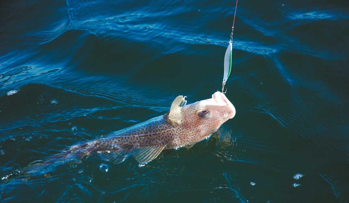 Knapp gehakt: Wer zu harte Ruten fischt, riskiert beim Blinkern Aussteiger
