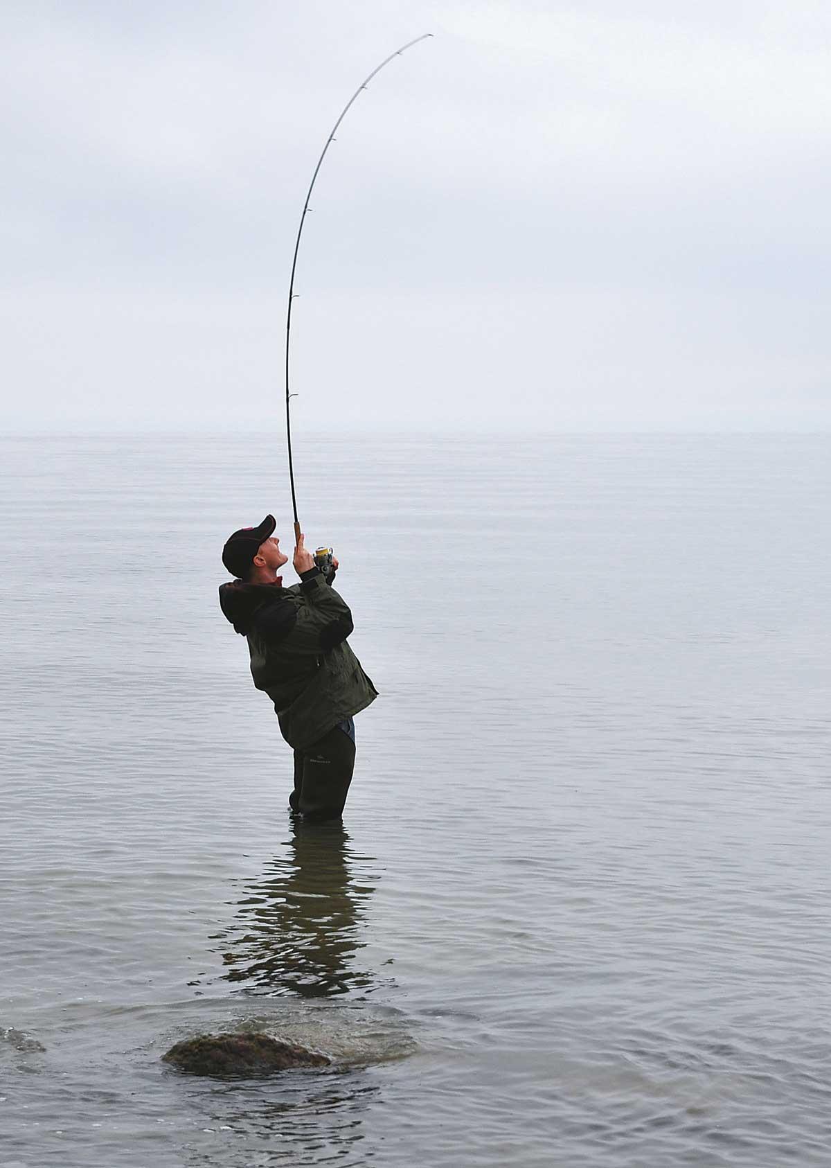 Ein Küstendorsch hat den Blinker auf voller Distanz genommen und wehrt sich nach Kräften.
