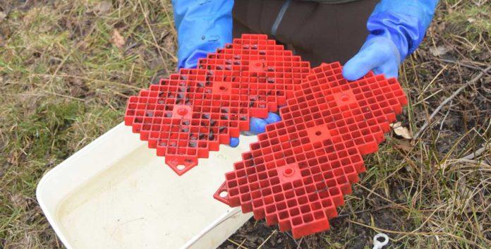 Mit Scotty-Boxen können Forelleneier geschützt direkt im Gewässer erbrütet werden. Das spart Kosten und Arbeitszeit.