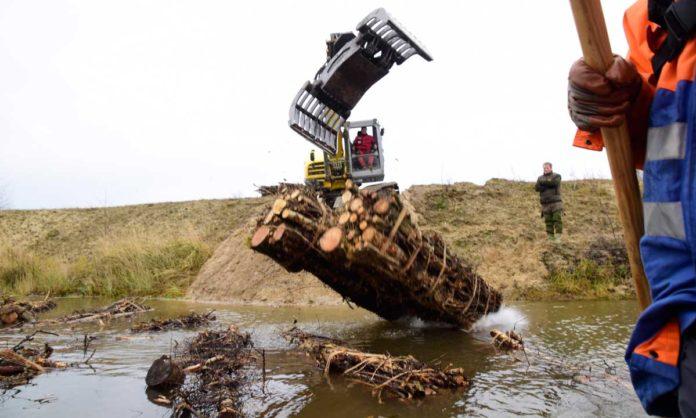 Totholzbündel im Flachwasser bieten in strukturarmen Baggerseen Kleinlebewesen und Jungfischen Lebensraum. Foto: Anja Gruner