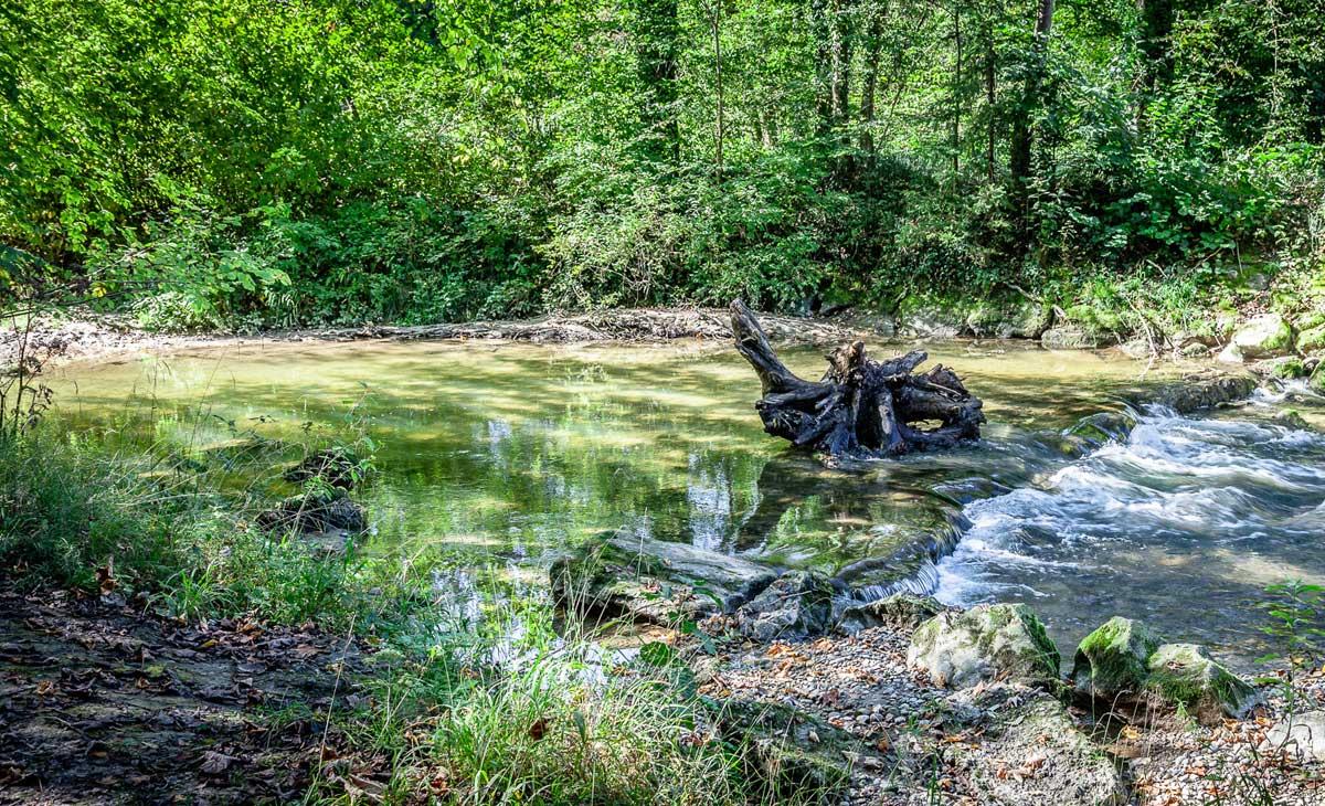 Natürlicher Gewässerlauf mit Abschattung durch Uferbewuchs. Hier steigen die Wassertemperaturen nicht so schnell an.