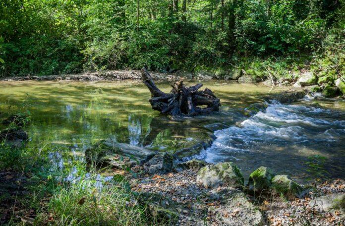 Angeln steht den Schutzzielen von Naturschutzgebieten nicht grundsätzlich entgegen. Foto: DAFV, Olaf Lindner