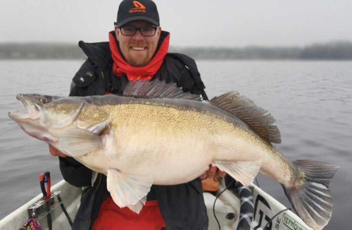 Was für ein Brocken! 14,9 Kilo brachte der finnische Zander von Perttu Haanpää auf die Waage.
