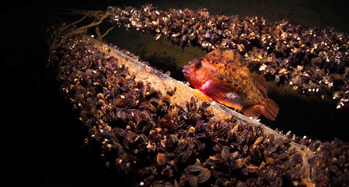 Auch Seehasen könnten virtuell in ihrem Element beobachtet werden. Foto: Wolf Wichmann