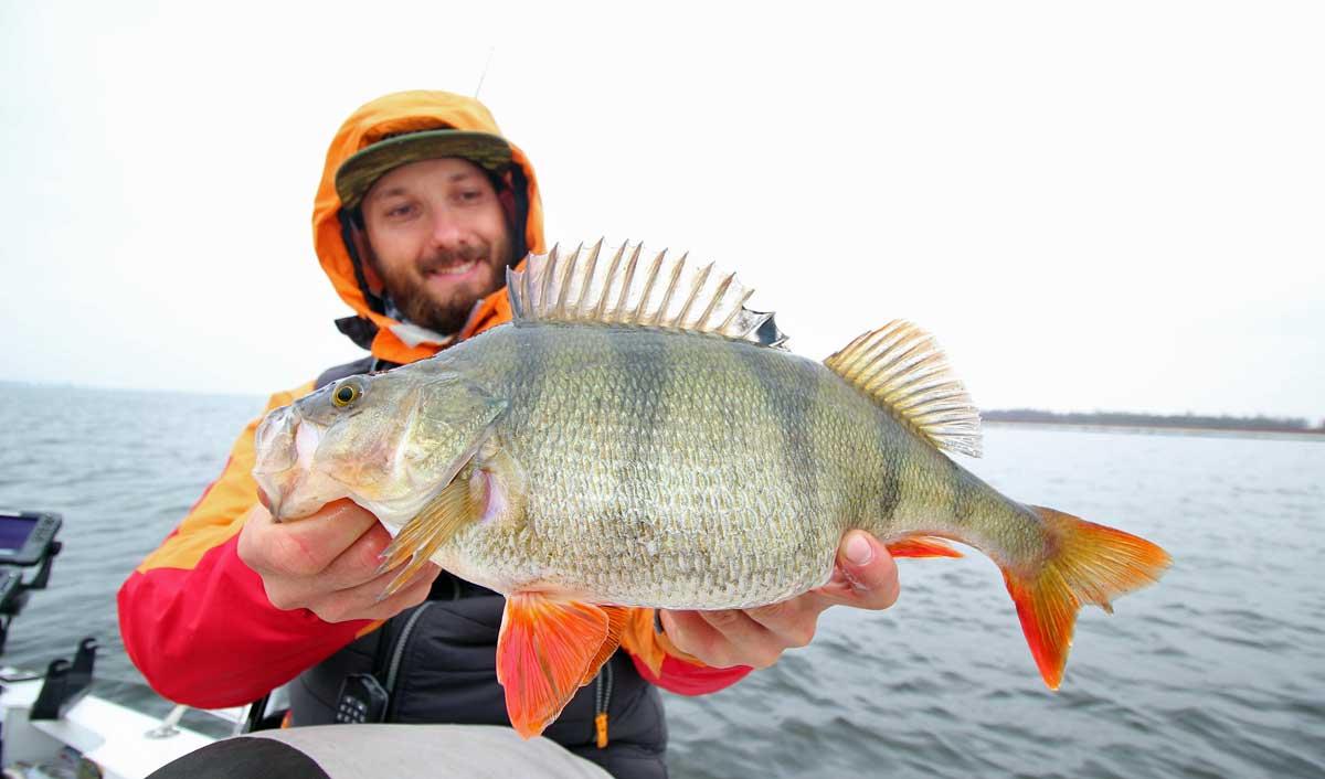Freddy Harbort fischt nicht nur auf Zander und Hecht, er ist auch als echter Barschspezialist bekannt.
