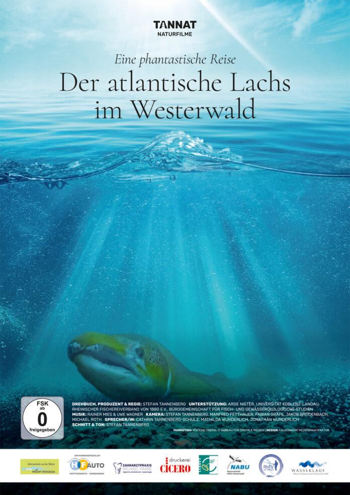Der Atlantische Lachs im Westerwald